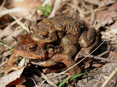 Nature, Animal World, Animal, Wood, Amphibian, Frog