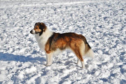 Snow, Dog, Animal, Winter, Mammal, Canine, Outdoors