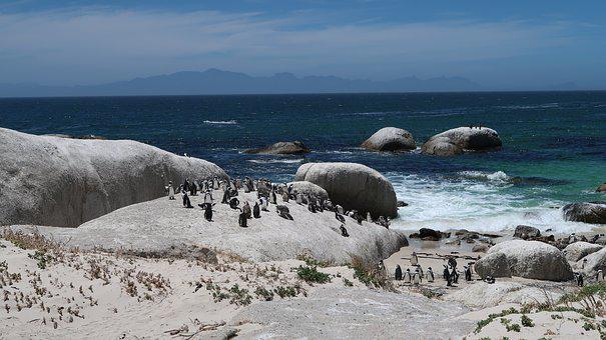 Boulders Beach, Cape Town, Africa, Penguin, Cold, Mar