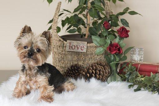 Little, Domestic, Animal, Cute, Dog, Studio, Decoration