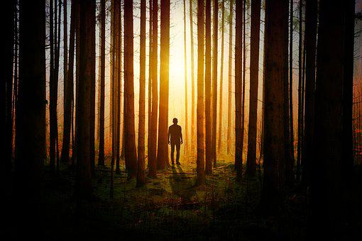 Light, Darkness, Forest, Man, Trees, Silhouette, Dark