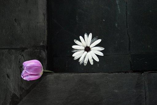 Flower, Decoration, Fountain, Decorative, Frame