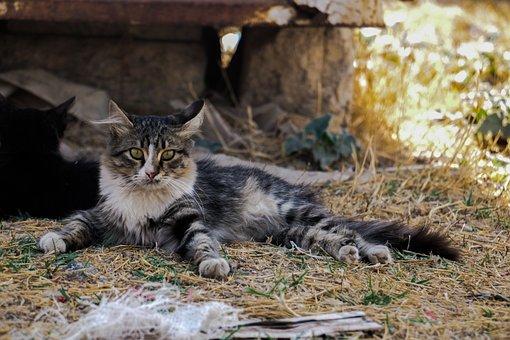 Animal, Nature, Cat, Mammal, Cute, Fur, Outdoors