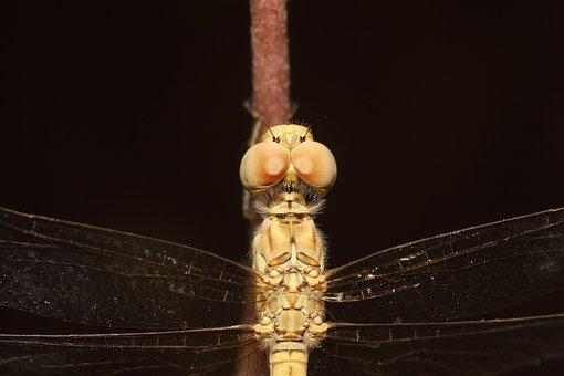 Insect, Dragonfly, Adhere