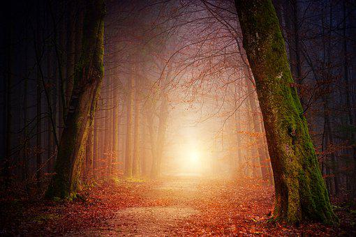 Nature, Wood, Tree, Light, Sun, Fog, Foggy, Forest
