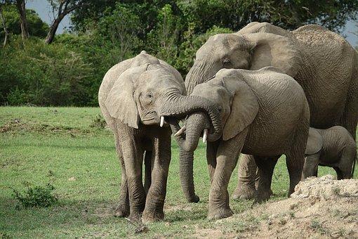 Mammal, Wildlife, Elephant, Animal, Nature, Kenya