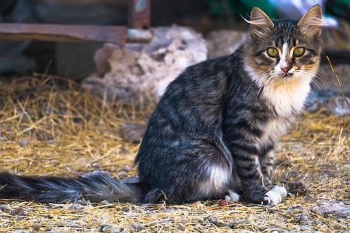 Animal, Cute, Mammal, Cat, Pet, Portrait, Fur, Kitten
