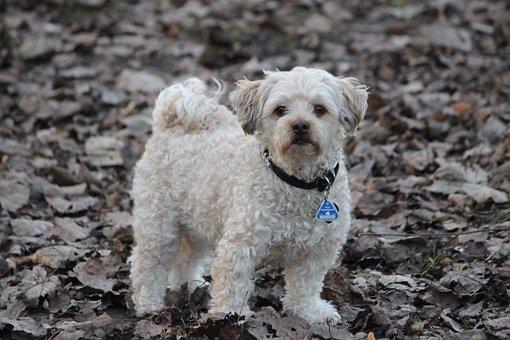 Cute, Animal, Dog, Mammal, Portrait, Pet, Small Dog