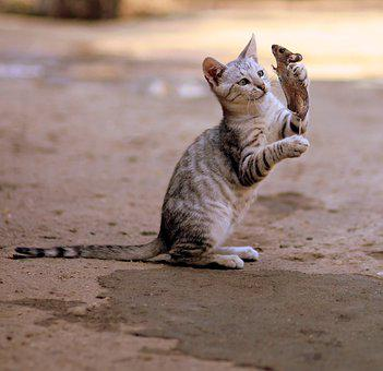 Cat And Mouse, Mammal, Nature, Animal, Wild, Cute, Cat