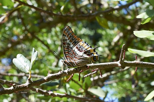 Nature, Tree, Outdoor, Wing, Fauna