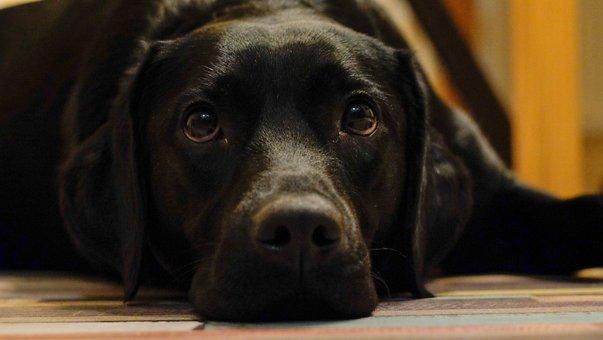 Dog, Cute, Pet, Animals, Home, Mammals, Puppy, Portrait