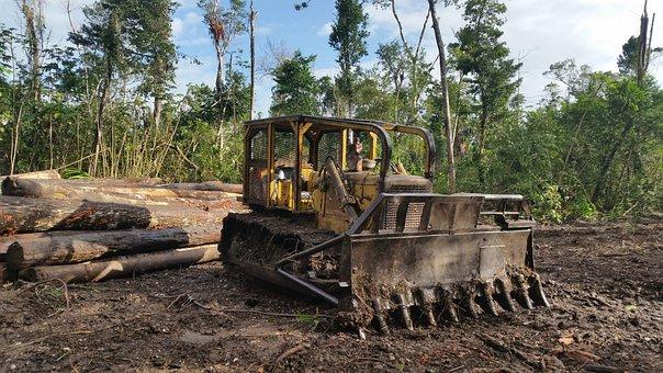 Wood, Soil, Industry, Machine, Tree, Bulldozer