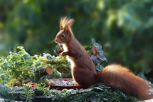 Nature, Animal, Mammal, Rodent, Squirrel