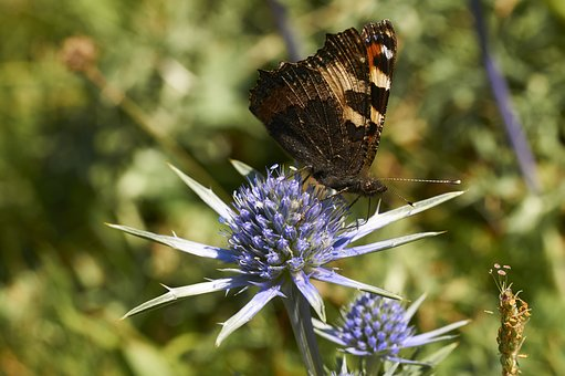 Nature, Insect, Outdoor, Flower, Summer, Butterfly