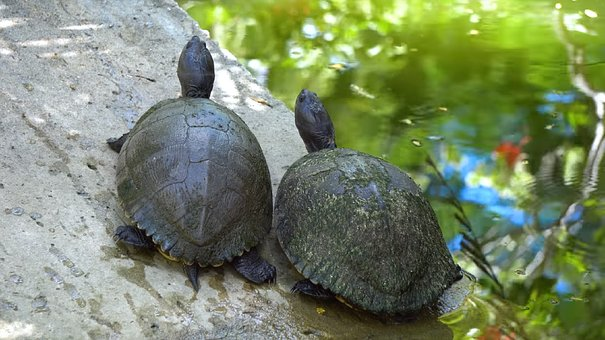 Turtle, Nature, Shell, Reptile, Tortoise