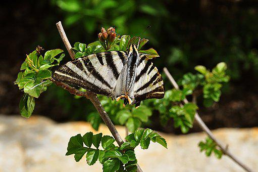 Butterfly, Insect, Plant, Garden, Summer, Wing