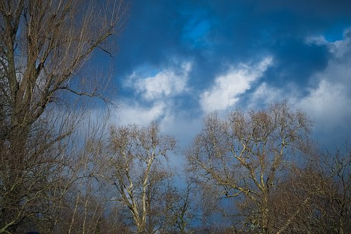 Tree, Nature, Landscape, Season, Sky, Weather, Clouds
