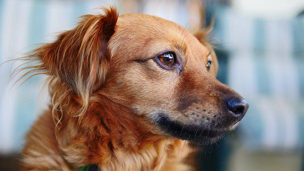Dog, Cute, Animal, Pet, Puppy, Looking, Relax, Doggy