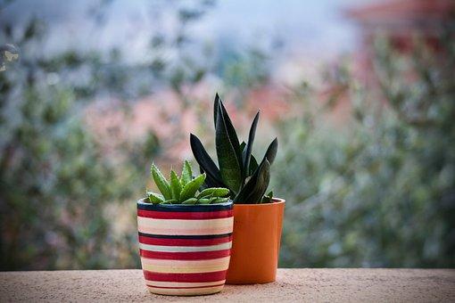Fat Plants, Nature, Leaf, Flower, Garden, Terrace