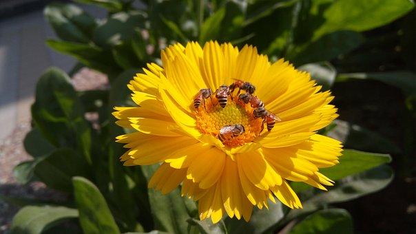 Flora, Flower, Nature, Garden, Leaf, Summer, Blooming