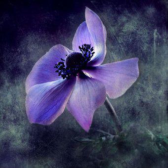 Flowers, Texture, Painting, Blue, Colorful, Deco