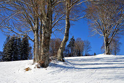 Black Forest, Ski Run, Children Hill, Beginners, Hill