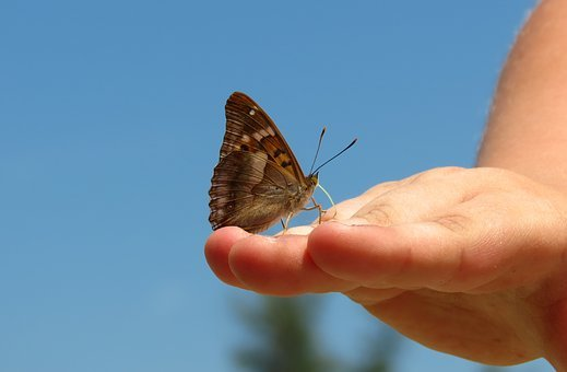 Nature, Butterfly, Insect, Summer, Proboscis