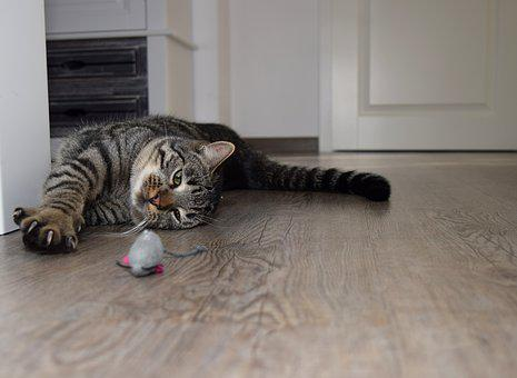 Cat, Animal, Cute, Pet, Room, Play, Mouse, Paw, Claw