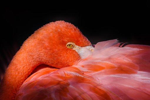 Birds, No Person, Nature, Animal Life, Tropical