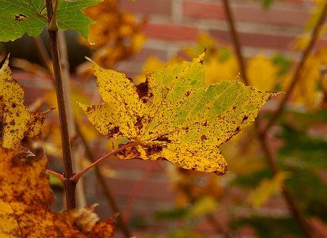 Leaf, Autumn, Nature, Plant, Orange, Intense Color
