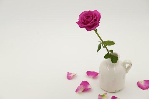 Rose, Rose Bloom, Blossom, Bloom, Bloom, Vase, Krug