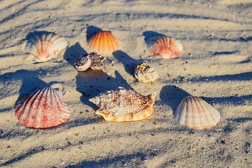 Mussels, Sea, Beach, Shells, Mussel Shells, Seafood