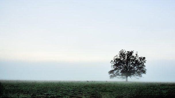 Nature, Fog, Sky, Tree, Landscape, Outdoors