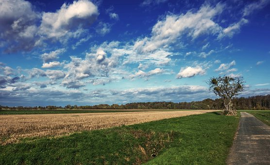 Panorama, Nature, Sky, Grass, Landscape, Tree