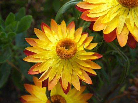 Yellow Flower, Flora, Petals, Nature, Flower, Yellow