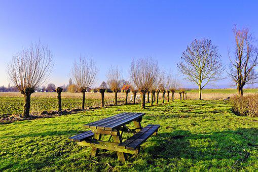 Picnic Table, Bench, Resting Place, Willow