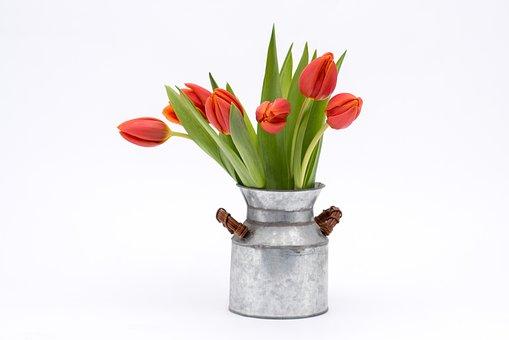 Tulip, Bouquet, Flower, Red, Vase, Plant, Still Life