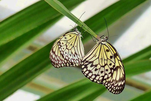 Nature, Butterfly, Insect, Tropical, Summer