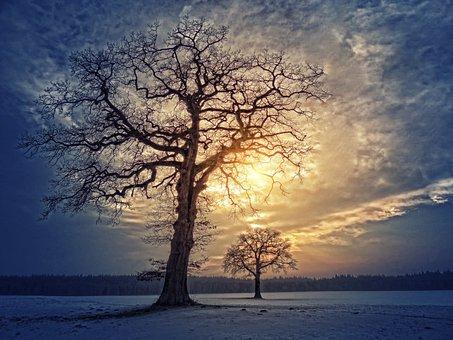 Tree, Nature, Landscape, Dawn, Sunset, Clouds, Sky