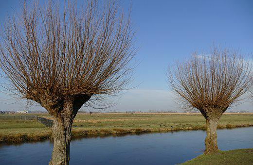 Ditch, Water, Willow, Pollard Willow, Tree, Pasture