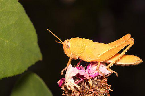 Grasshopper, Insect, Nature, No One, Sheet, Flower
