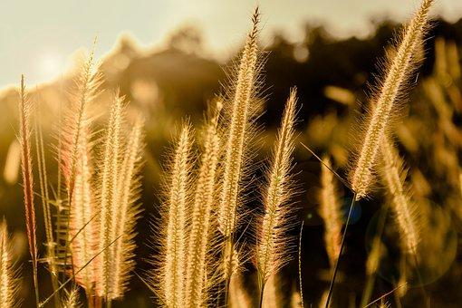Flowering Grass, Grass, By Nature, A Blade Of Grass