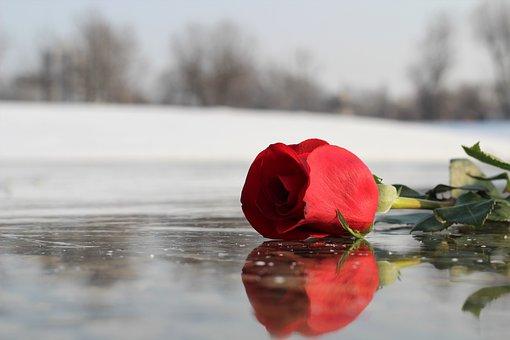 Red Rose On Ice, Frozen Lake, Love Symbol, Romance