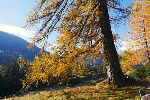 Autumn, Nature, Wood, Landscape, Season, Schönwetter
