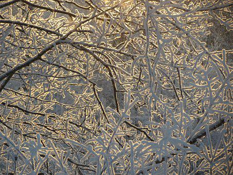 Leann, Branch, Frost, Cold, Morning, Forest, Sun, Light