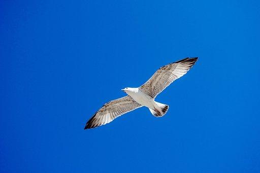 Bird, No One, Nature, Living Nature, Flight, Freedom