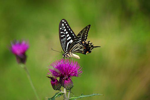 Nature, Butterfly, Insects, Outdoors, Flowers