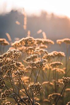 Nature, Plant, Grass, Sky, Dawn, Summer, Field