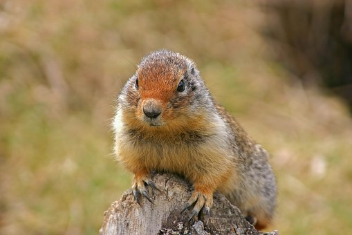 Mammal, Rodent, Animal World, Nature, Squirrel, Animal