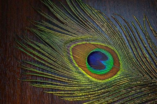 Desktop, Pattern, Peacock, Nature, Color, Bird